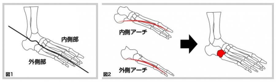 足において、安定性をつかさどるのは「外側部」です。その外側部の「アーチ」の中心にある骨が立方骨なのです。また、「内側部」は外側部の上に乗る形で機能しているため、立方骨を支えることで外側部の土台が安定し、その上に乗っている内側部の運動部分はさらに動きやすくなります。